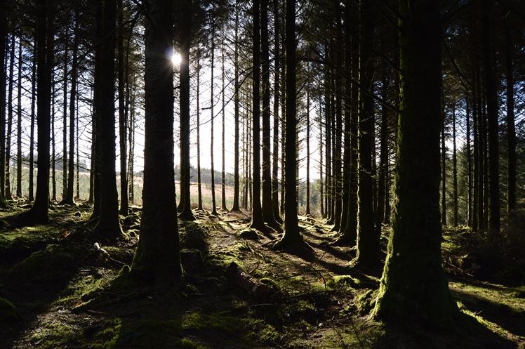 09dartmoor