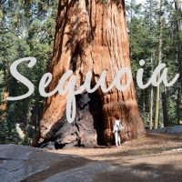 HONEYMOON DIARIES: SEQUOIA NATIONAL PARK