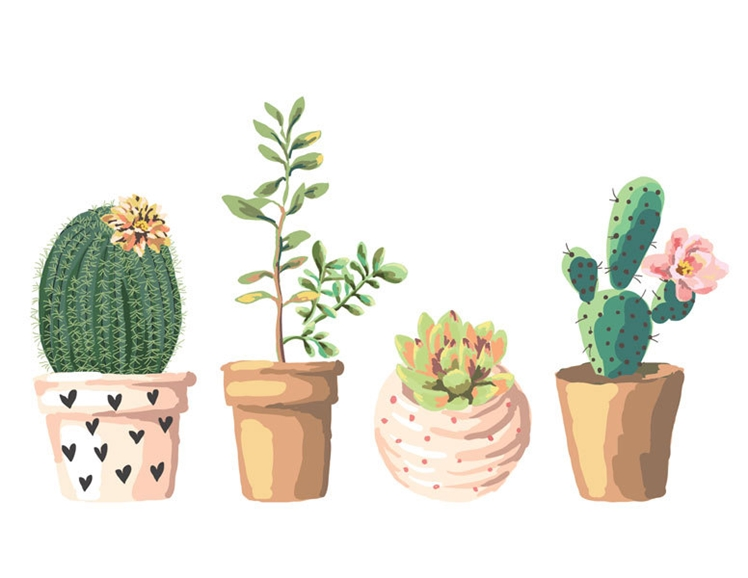 Succulent Illustration | Printable Quirks