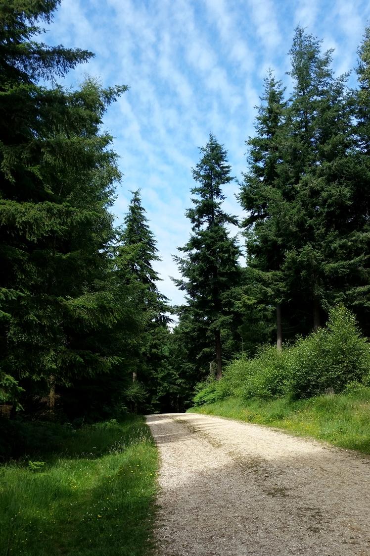 New Forest - Midgins' Blog